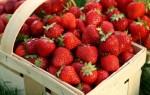 Основные правила выращивания клубники весной: уход и подкормка