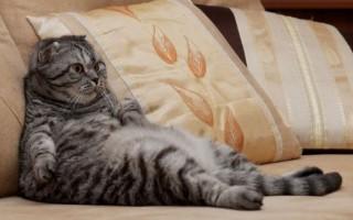 Почему кот вдруг начал гадить не в лоток? Как быть?