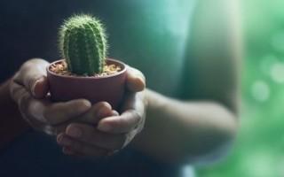 Как легко и правильно вырастить кактус из маленького отростка без корней