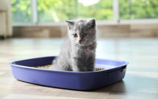 Можно ли приучить котенка за 1 день ходить в лоток
