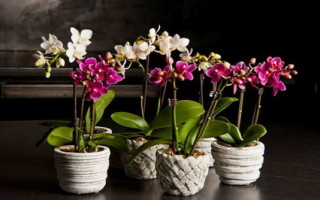Субстрат для пересадки орхидей: как подготовить кору своими руками