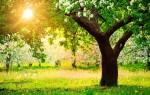 Спасаем урожай заранее: сроки весенней обработки плодовых деревьев от вредителей