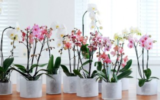 Рукотворное чудо: как правильно пересадить детку орхидеи в домашних условиях