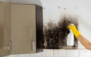Как самостоятельно избавиться от черной плесени на стенах и потолке: проверенные домашние способы