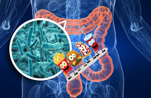 бактерии в ЖКТ