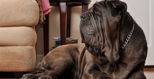 урчание в животе у собаки