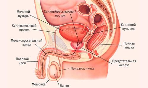 Препараты и лекарства от простатита
