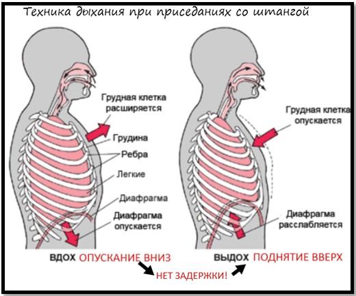 техника дыхания при приседаниях со штангой