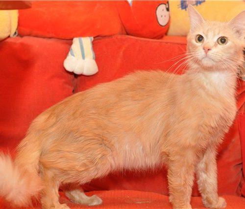 кошка стоит на диване