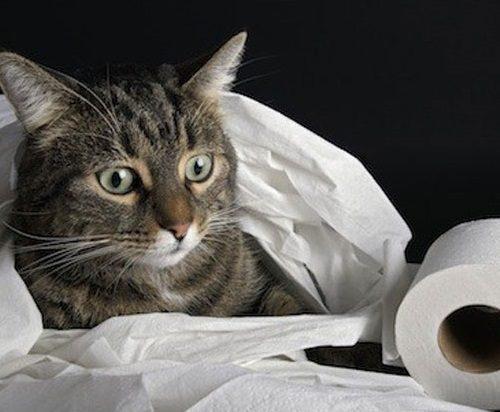 Коты гадят в доме приметы