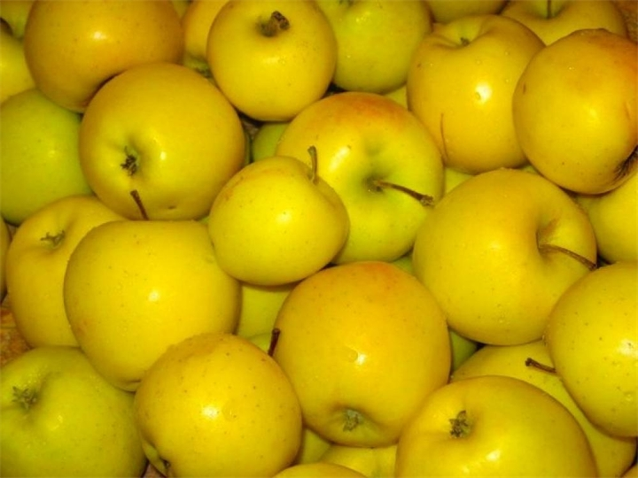 плоды яблони Голден Делишес