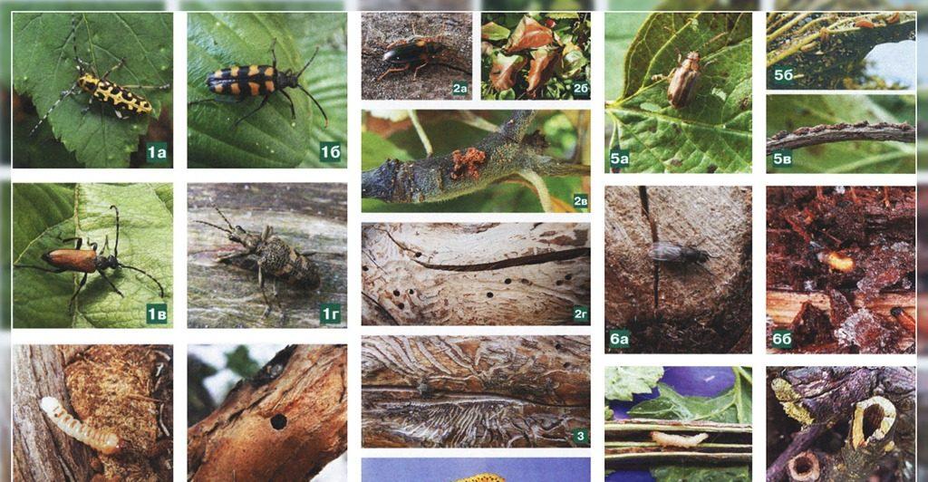 разновидности вредителей фото