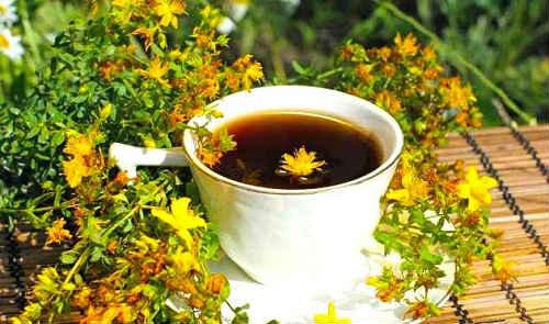 целебный чай из зверобоя