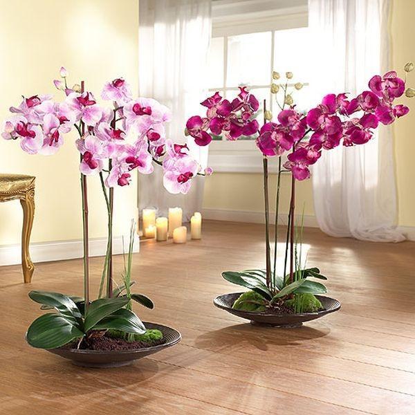 Орхидея фаленопсис - уход в домашних условиях, как 33