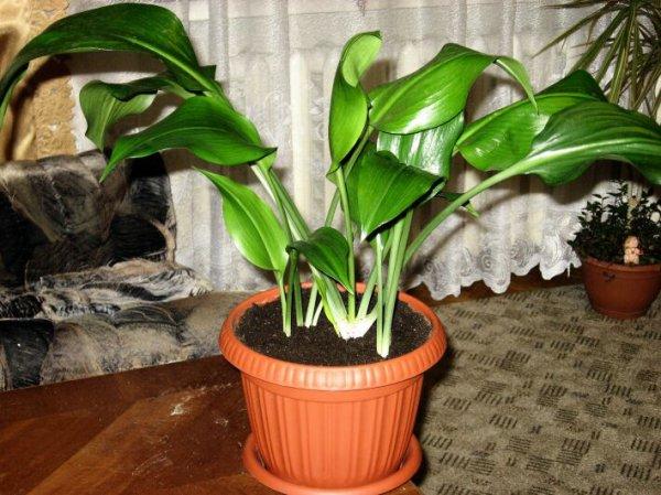 комнатное растение на полу