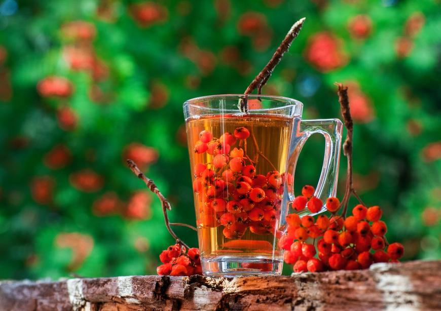 Чай из красной рябины