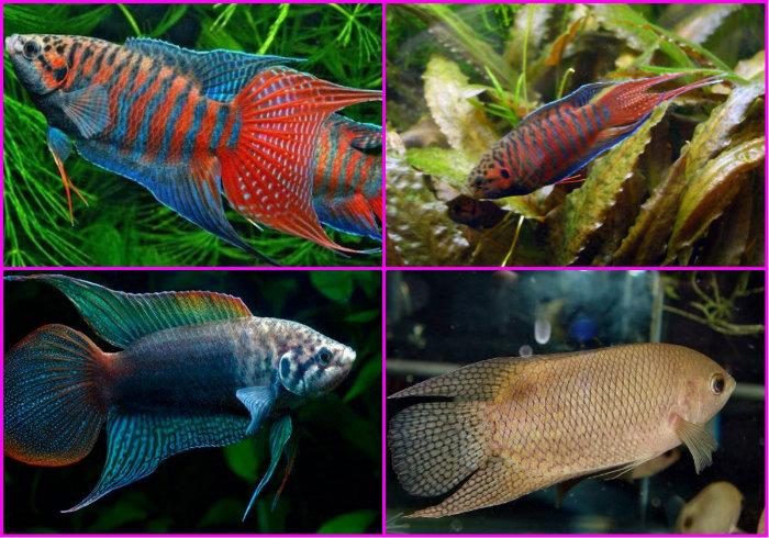 разновидности обитателей аквариума