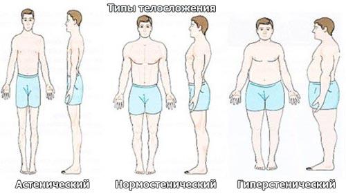мужское телосложение